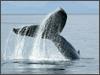 Alaska-Whale-watching-thumbnail