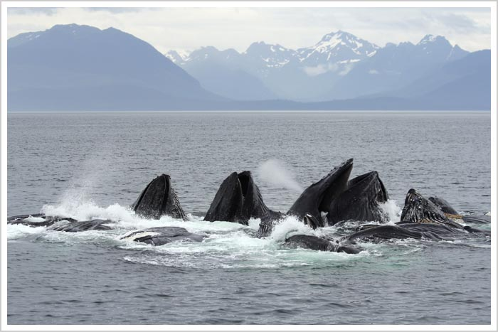 Alaska Whale Watching Cruises and Wildlife Tours | MV ...