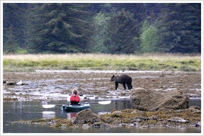 Bear viewing from a kayak in Alaska
