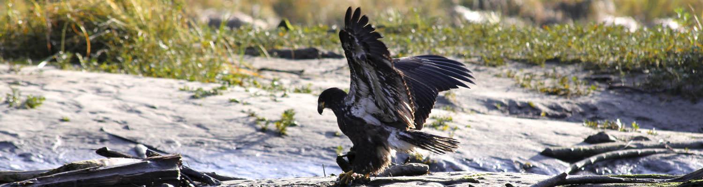 Canada inside passage cruises small ship cruise bald eagle