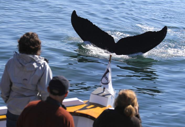 Alaska, whales watching, tour, Juneau