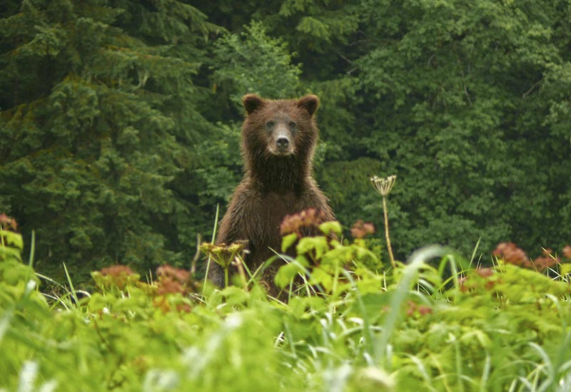 Image result for standing bear in green meadow